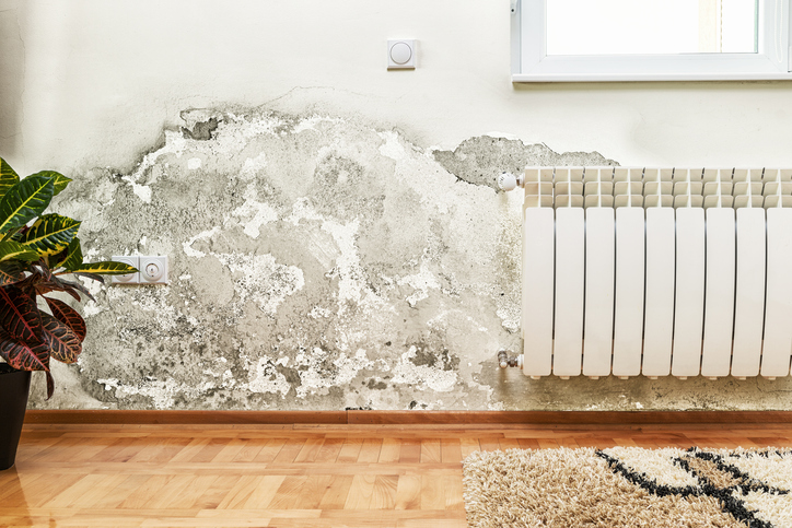Mold Damage Repair in Tri-Cities